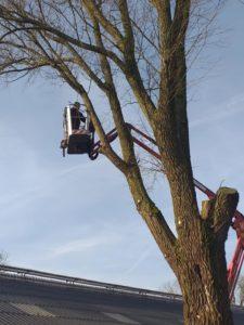Kramers Grienwurk Hallum bomen snoeien na stormschade